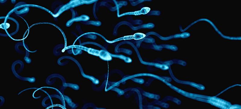 Tinh trùng là tế bào đơn bội, nó kết hợp với tế bào trứng để tạo thành hợp tử